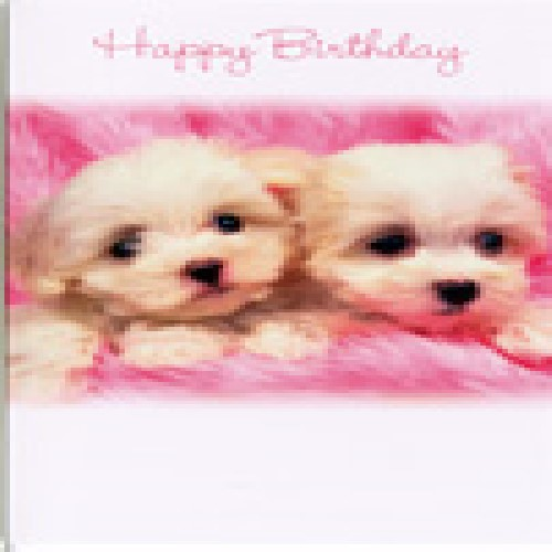 Happy Birthday Card With Two Small Dogs By Simon Elvin